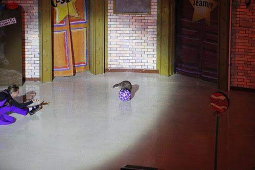 Otter on a ball