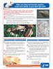 A thumbnail image of the feeding and handling reptiles poster
