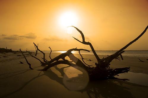 Sunset Driftwood Beach by erickpineda527