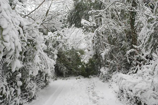 snow in rye DSC_3270_1