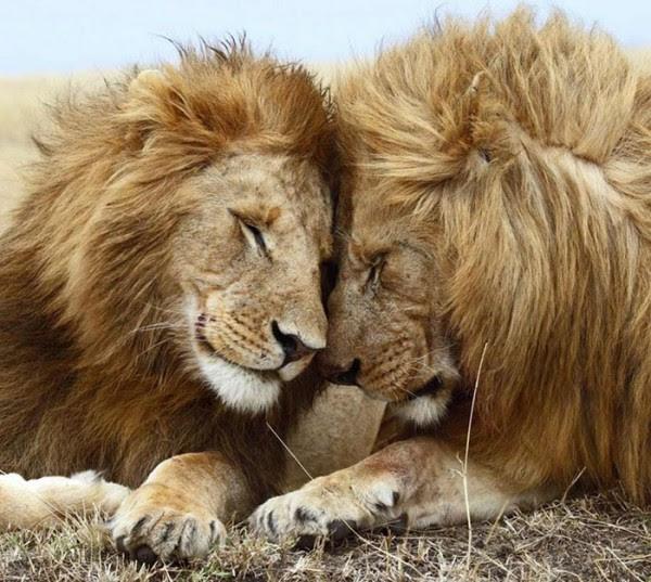 animales-abrazados-23
