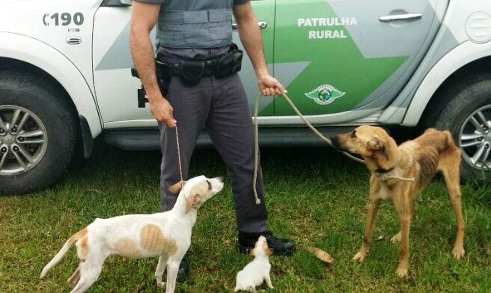 Animais foram localizados em imóvel de Bertioga, SP (Foto: Divulgação/Polícia Ambiental)