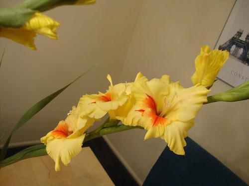 princeton farmer's mkt flowers 9/1/11