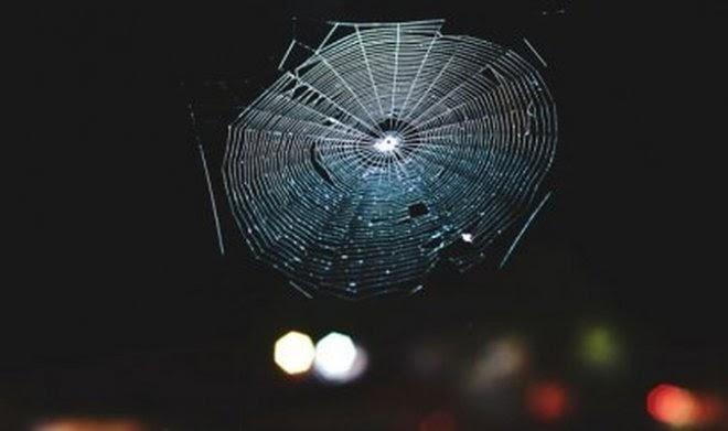 Ученые превратили паутину в музыкальный инструмент и заставили ее звучать