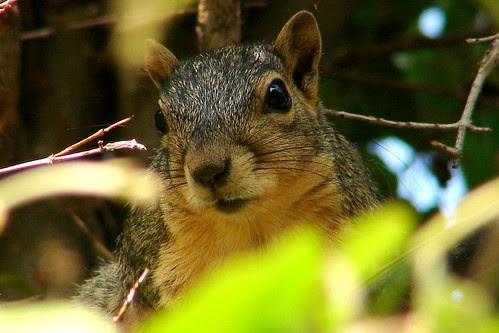 Hello Squirrel