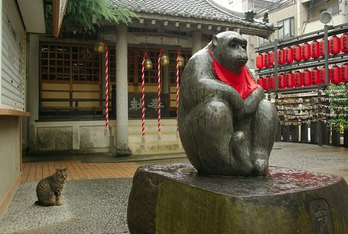 Cat, Monkey