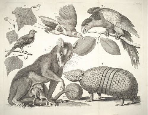 armadillo, rat-like mammal + birds