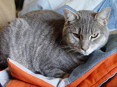 jean blanket with cat