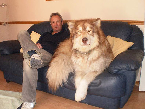 10. Just look at the size of this giant dog