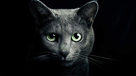 hd hintergrundbilder katze grau blick augen ohren desktop