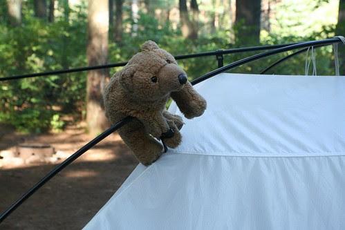 Algonquin Park Pog Lake 2009_135