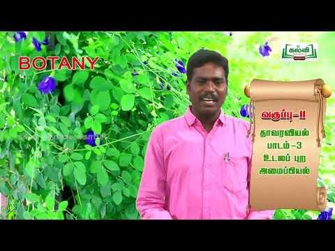11th Bio Botany உலகின் பன்முகத்தன்மை பாடம் 2 அலகு 3 பகுதி 3 Kalvi TV