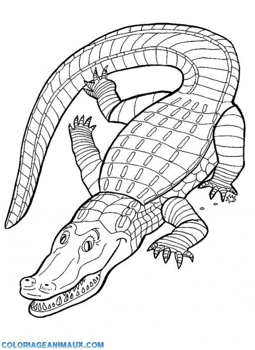 Coloriage Gros Crocodille Qui Dort Au Soleil à Imprimer