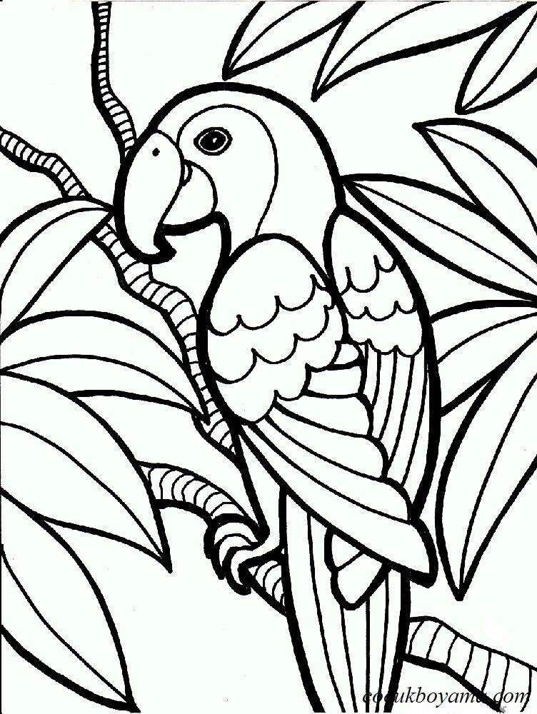 Muhabbet Kuşu 5 ücretsiz Boyama Resimleri
