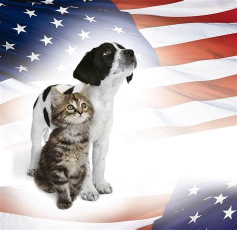 north shore animal league memorial day adoption specials