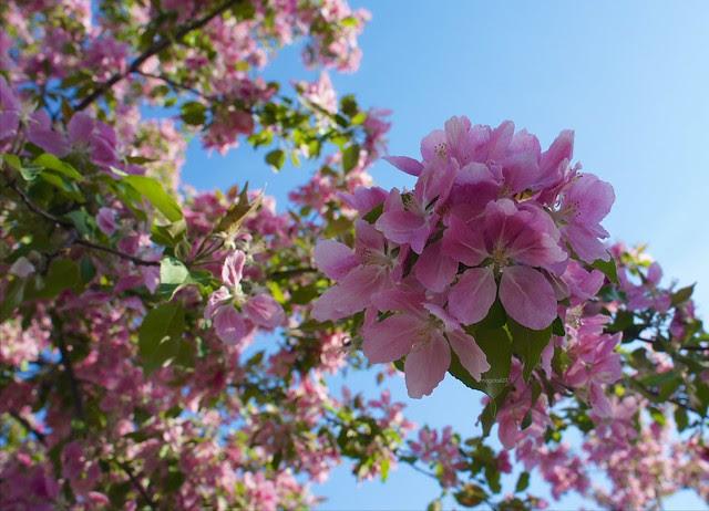 anteketborka.blogspot.com, pommier88