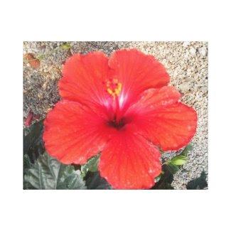 Red Flower wrappedcanvas