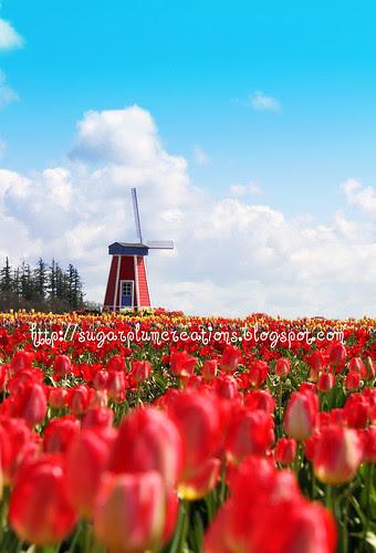 Tulips12 W