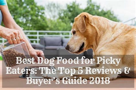 dog food  picky eater  enjoy therapy pet