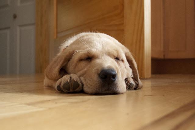 sleeping pouncey