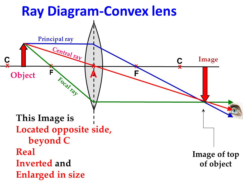 33 Convex Lens Ray Diagram