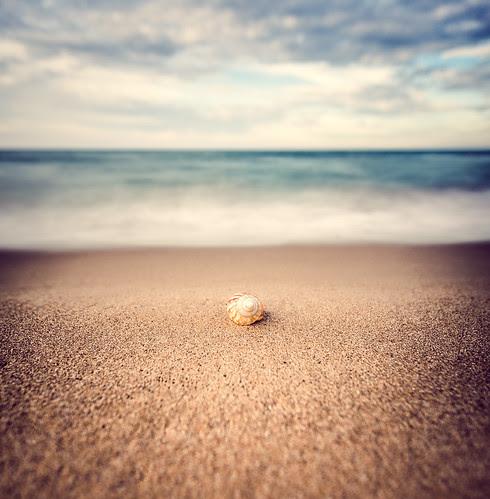 Sea shell, Portsay, Marsa Ben M'hidi, Tlemcen, Algéria por Samere Fahim Photography