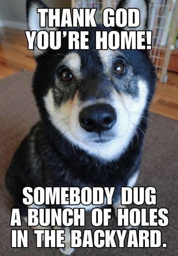 Digging Dog Funny Birthday Card   Greeting Cards   Hallmark