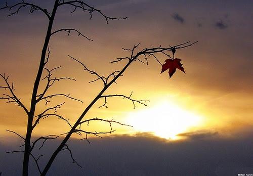 Αποτέλεσμα εικόνας για the last leaf