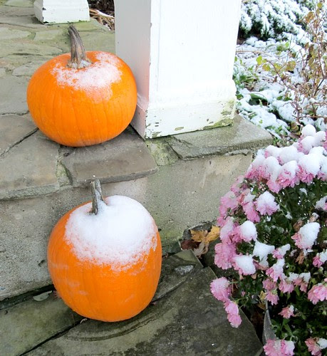 chilled pumpkins