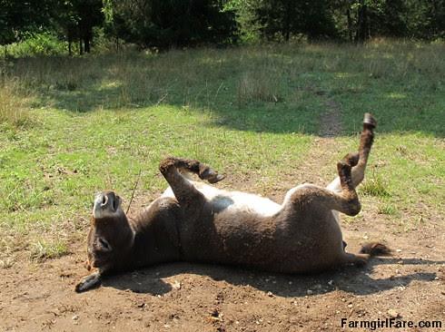 Tuesday dose of seven donkey cute (1) - FarmgirlFare.com