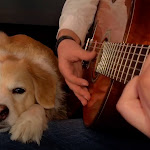 Top 10 Songs About Pets - Ultimate-guitar.com