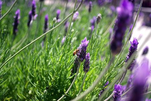 Pentax M 28mm f/2.8 Test Shots on Bee