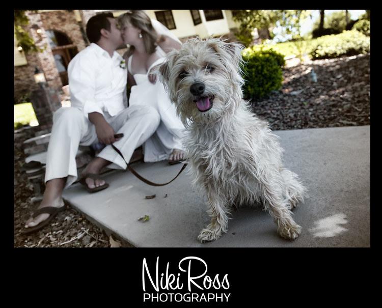 bride-groom-puppy
