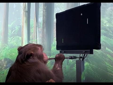 Neuralink's neurotech can make monkeys play video games