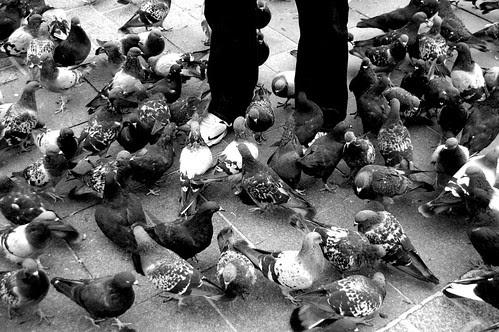 Krakow_PigeonsBWFeet