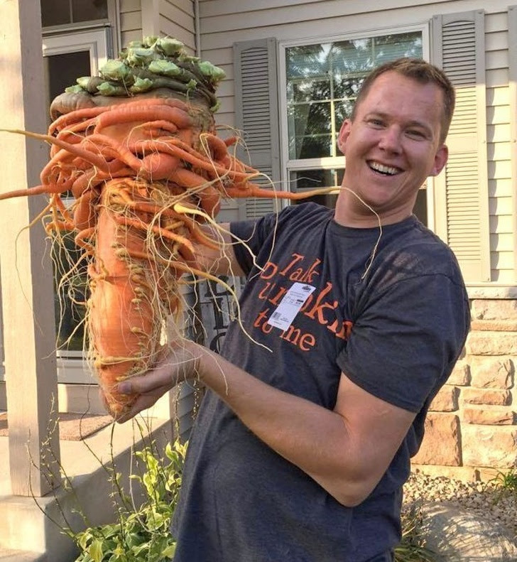 7 - This carrot weighs 22 lbs.