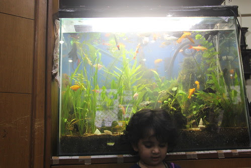 The Street Photographer Canon User Nerjis Asif Shakir 23 Month Old With Marziyas Fish Tank by firoze shakir photographerno1