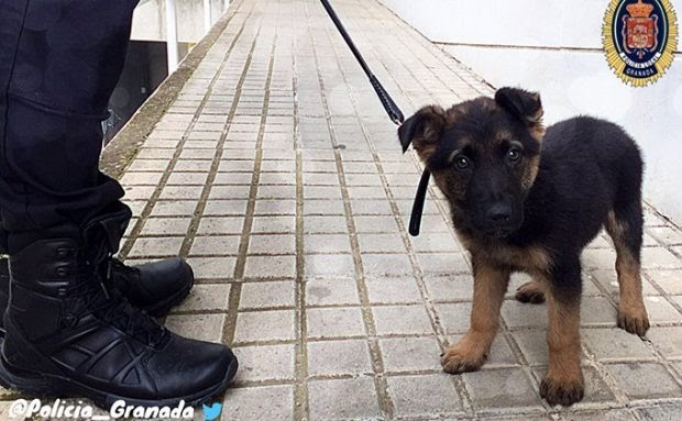 Necesitamos policías y guardias civiles que se tomen muy en serio la protección animal