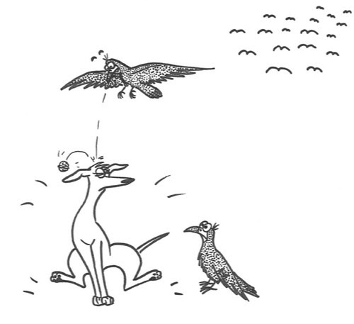 Comic-Whippet-Walnuss