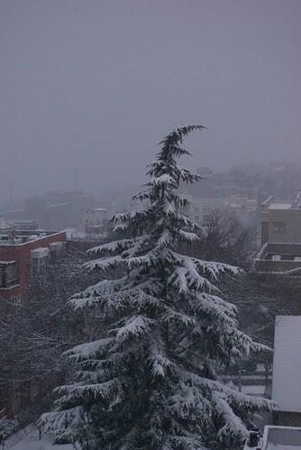 2008-12-18 Snopocalypse Seattle (23)