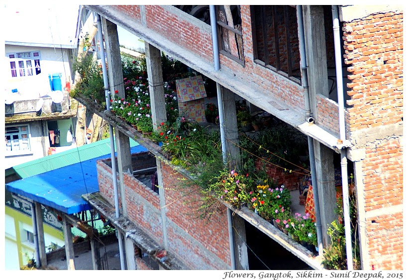 Flowers of Gangtok houses