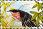 Yellow-crowned Gonolek Laniarius barbarus