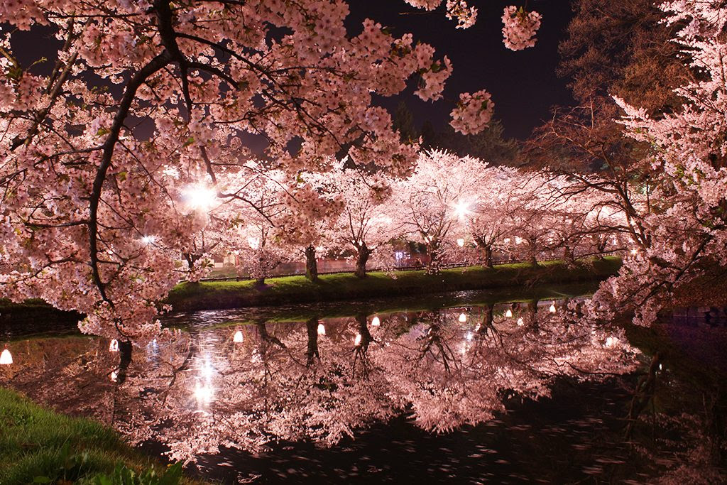 Japanese City Accepts Bitcoin Donations for Cherry Blossom Sanctuary