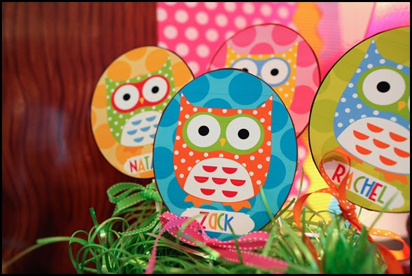 The Owl Collection