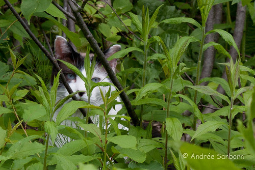 Buddy in the Brush-2.jpg