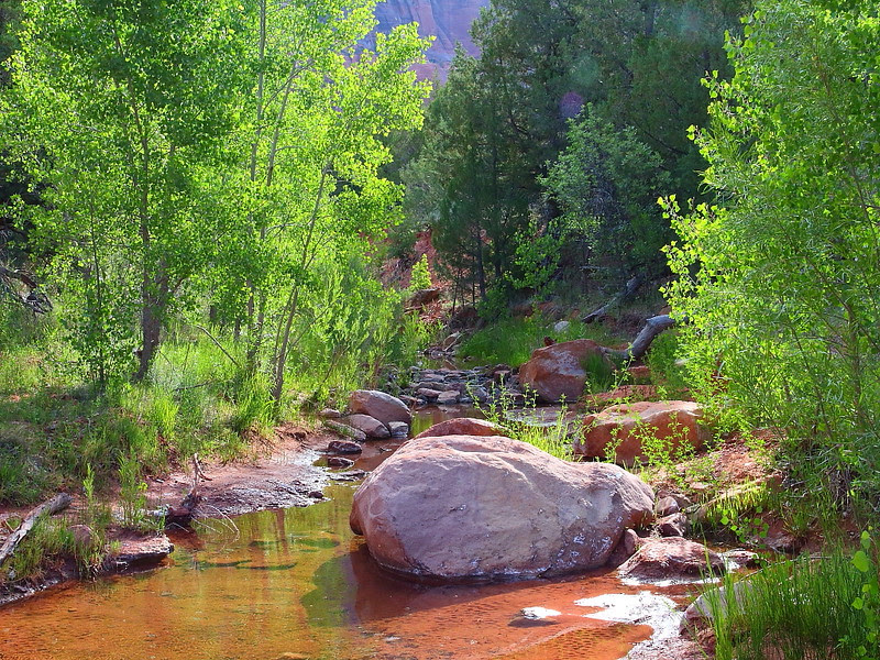 IMG_5767 Kolob Arch/La Verkin Trail, Zion National Park