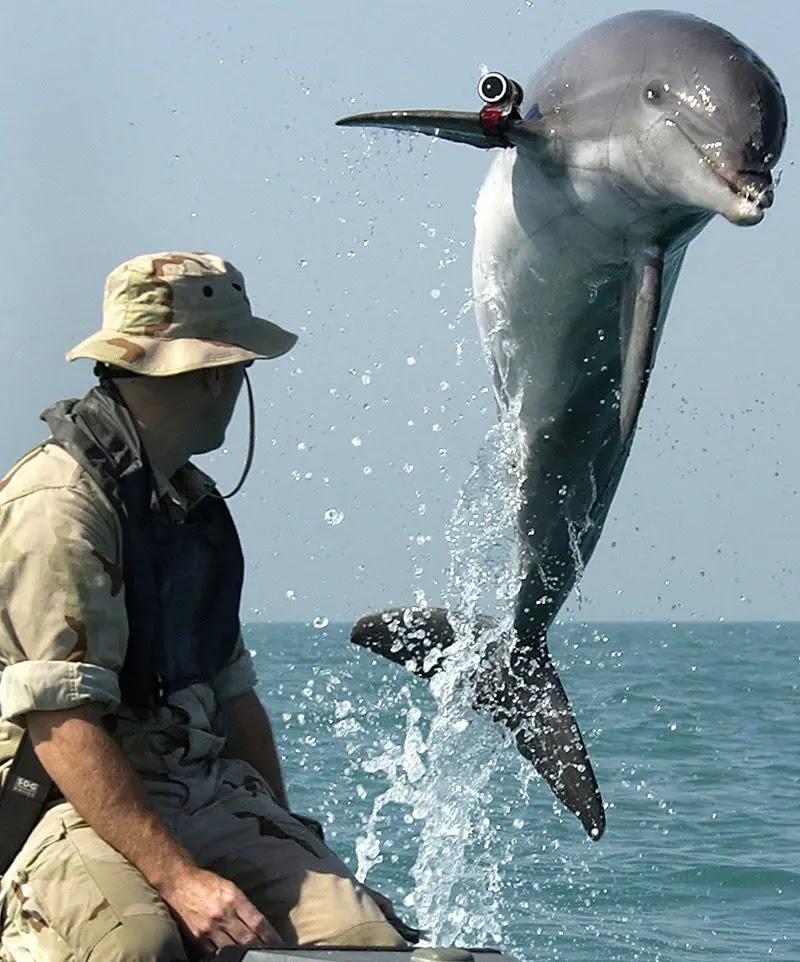 http://www.maritimeherald.com/wp-content/uploads/Dolphin-with-Camera.jpg