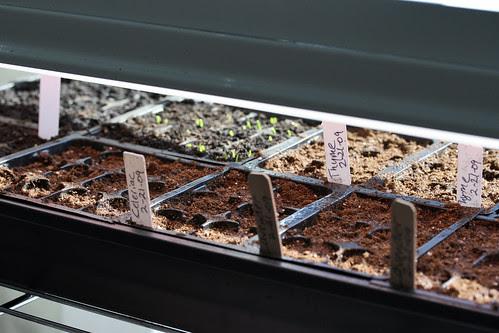 seeds 4