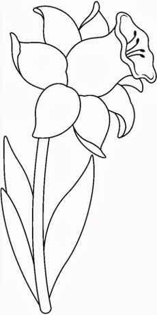 Imagenes De Flores Para Colorear Y Pintar