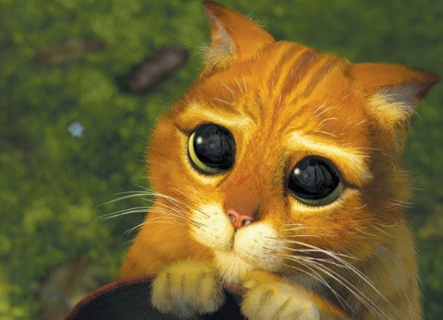 Diferentes cores, mas apenas como bonito: Ksenia tem sido comparado ao gato adorável Gato de Botas